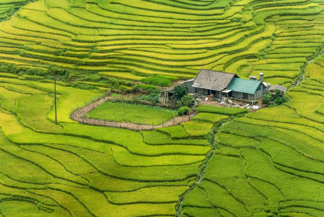 arrozales de vietnam foto de bisual studio