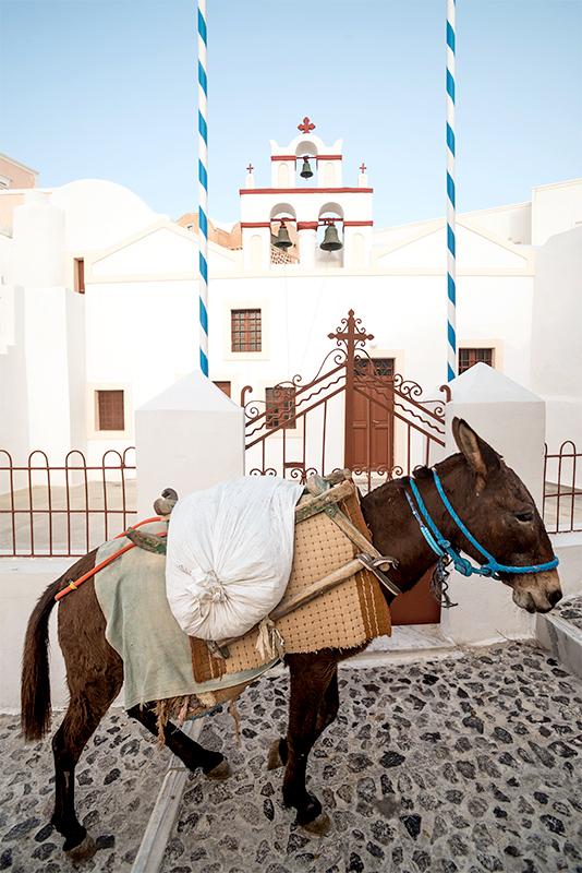 burro en fira, la capital de santorini