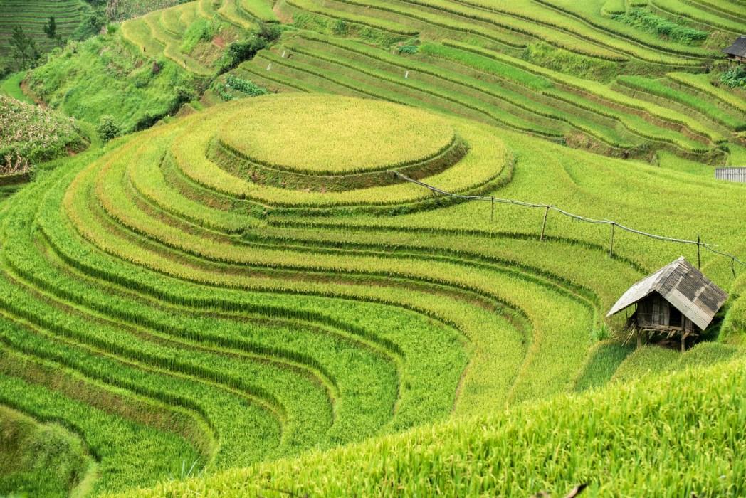 terrazas de arroz en vietnam foto de bisual studio