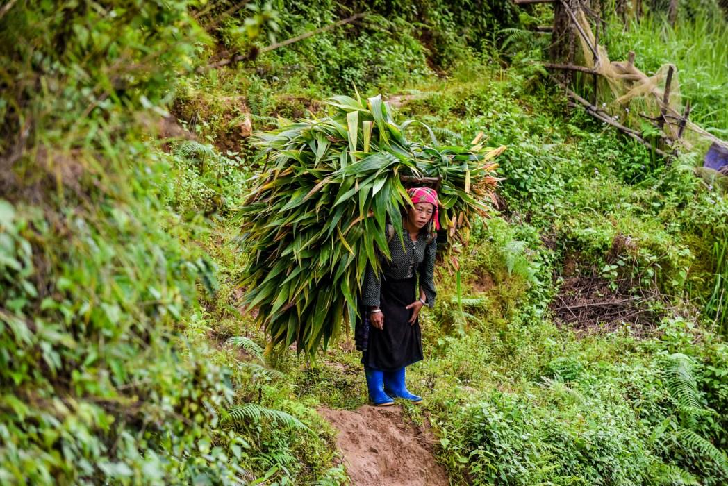 paisajes rurales de vietnam foto de bisual studio