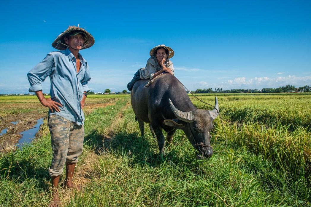 agricultores en los campos de arroz