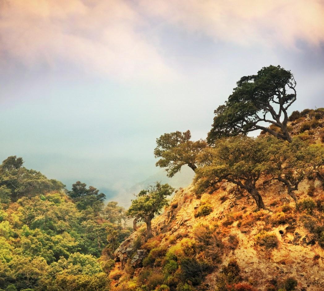 parque natural de los alcornocales en cádiz andalucía
