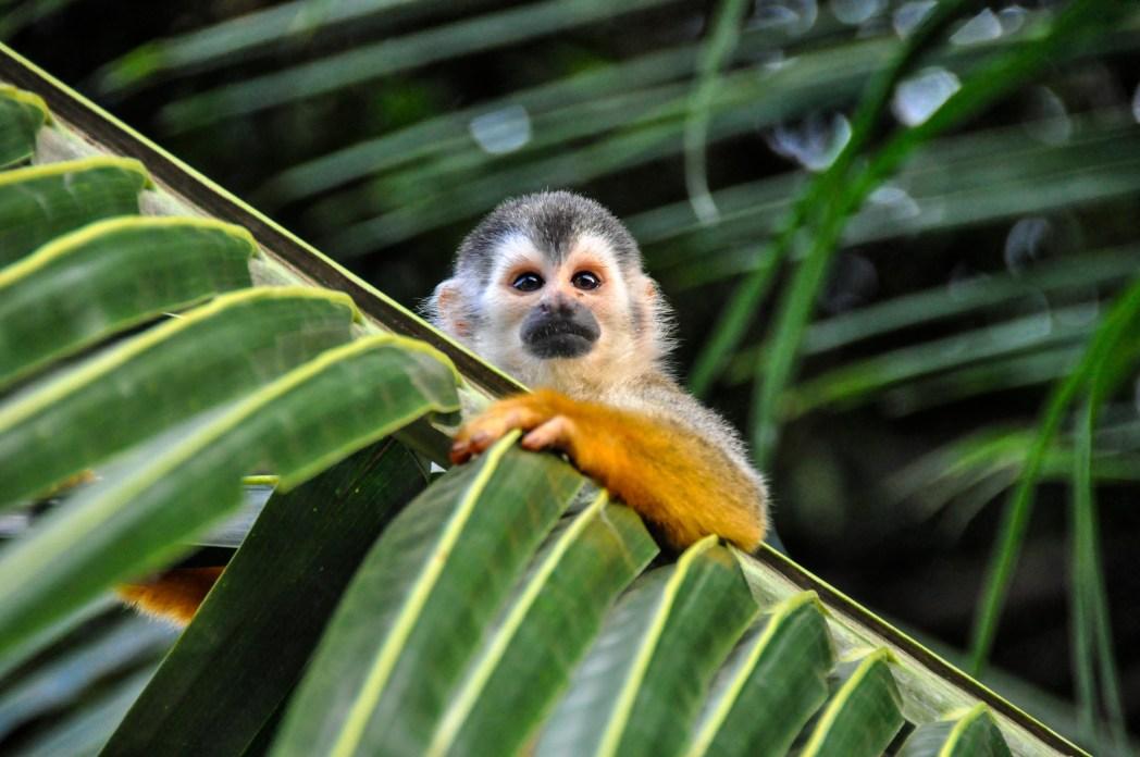 Los 10 lugares más espectaculares de Costa Rica | Skyscanner - Noticias