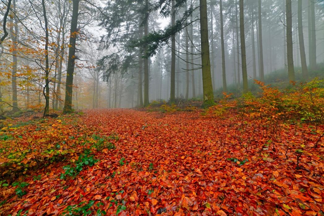 bosque de las ardenas en bélgica
