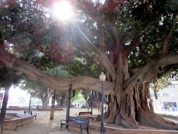 parque con árboles