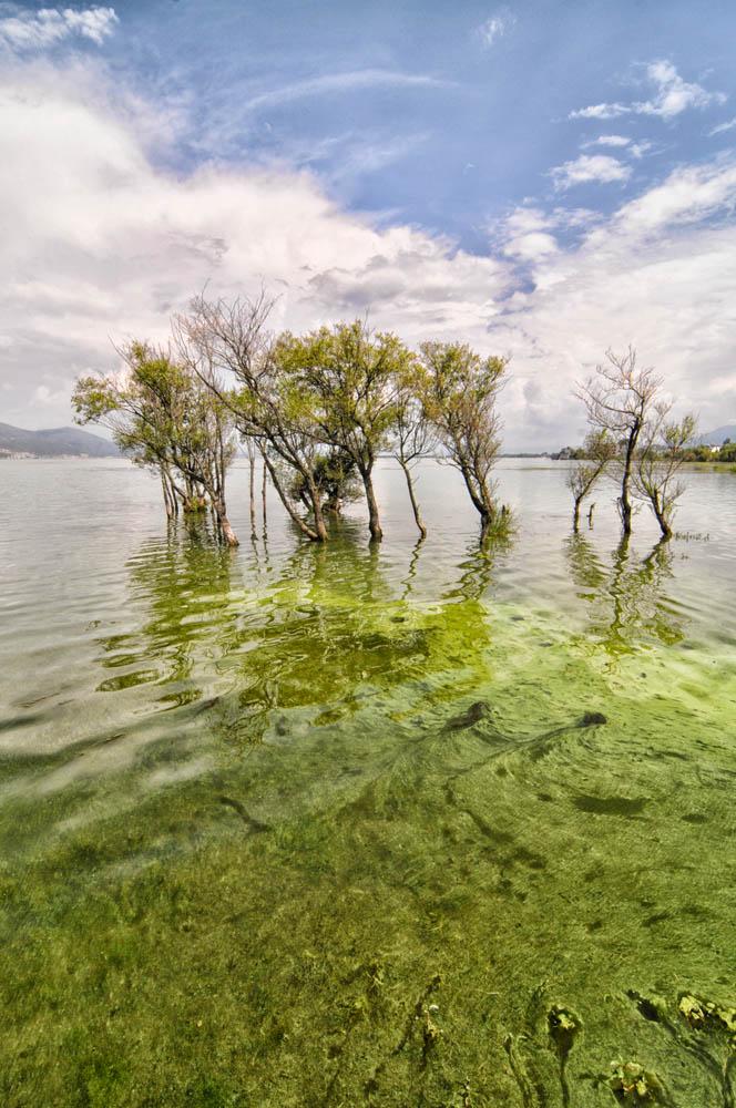 Lago de Dali