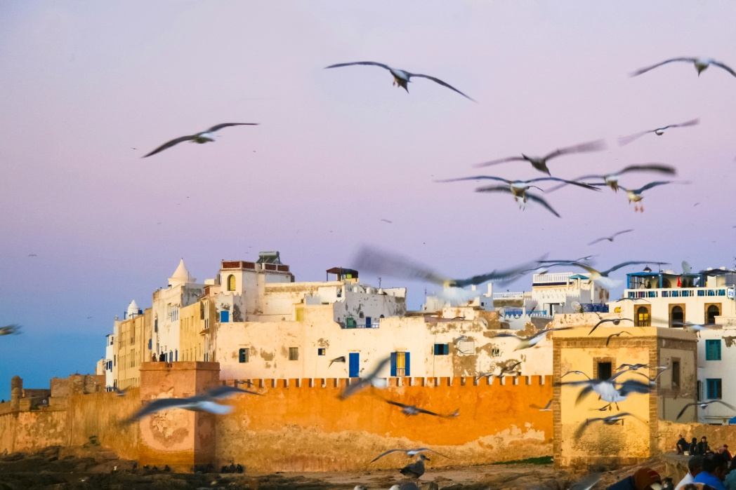 gaviotas volando sobre essaouira en marruecos