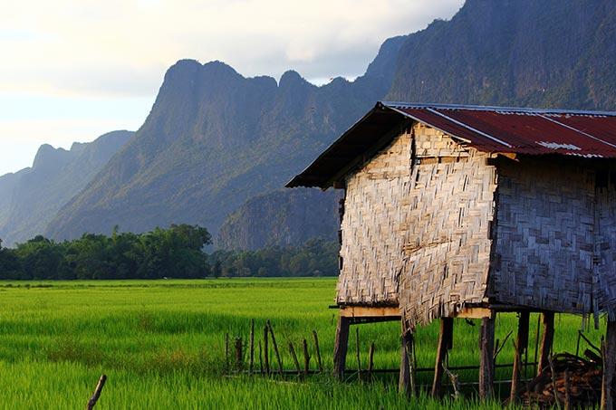arrozales en laos