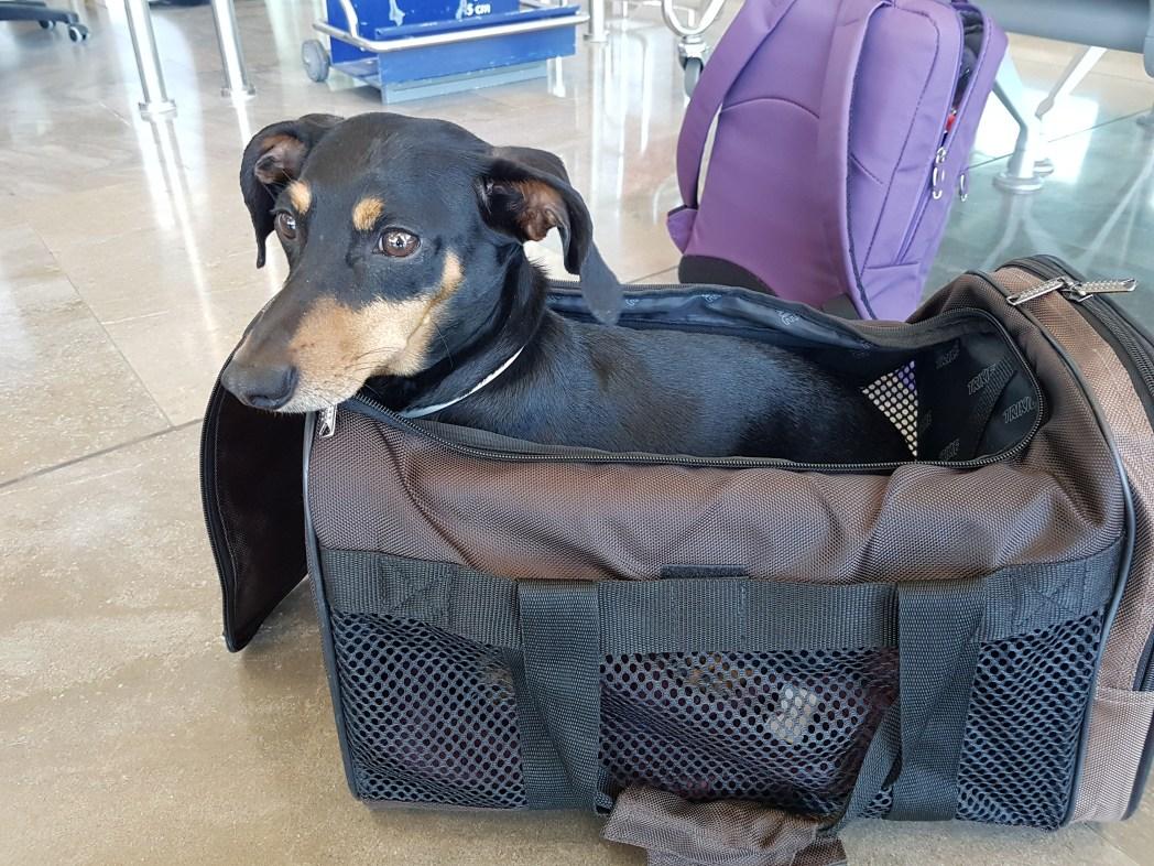 perro en una maleta en el aeropuerto
